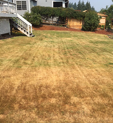 Rethink your yearly brown, dormant lawn