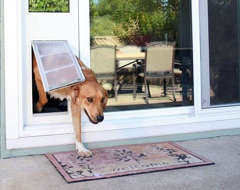 Dog exits house via pet door