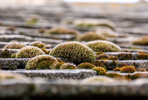 It's time to CAUTIOUSLY remove roof moss
